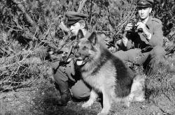 Pohraniční stráž v Československu