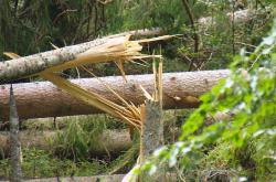 Po bouřce zůstaly na Šumavě tisíce ulámaných a vyvrácených stromů