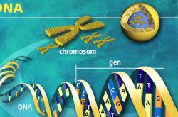 DNA dvojšroubovice