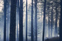 Bez komentáře: Požár lesa na Rakovnicku