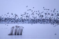 Díky obnově původní vegetace na ostrově častěji hnízdí ptáci