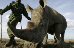 Záchrana nosorožců