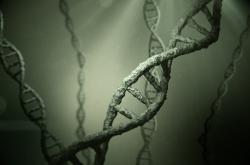 Šroubovice normální DNA