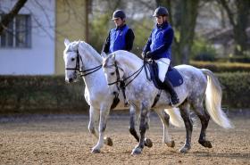 Starokladrubští koně
