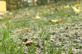 Obyvatelé si stěžují na současnou podobu trávníku