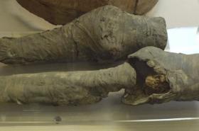 Nohy Nefertari