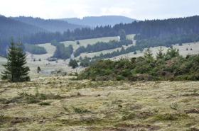 Obnova bezlesí