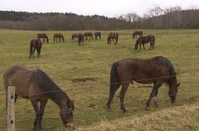 Koně v péči ÚZSVM