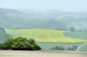 Vysoká koncentrace pylů v ovzduší kvůli teplému a větrnému počasí