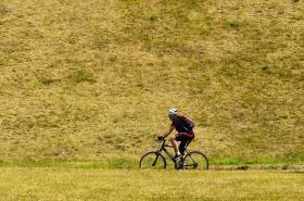 Neutěšený stav vegetace vlivem horkého a suchého počasí na Jižním Městě v Praze