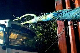 Strom spadlý na nákladní vůz