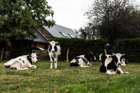 Farmáři po požáru chemičky vylévají mléko