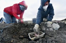 Archeology u Bíliny vystřídají rypadla
