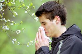S mírným zpožděním alergie opět nastupuje