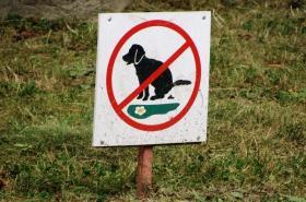 Zákaz venčení psů