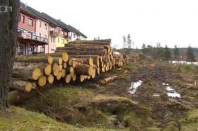 Pokácené stromy u Lipenské přehrady