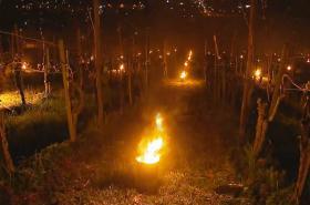 Ovocnáři i vinaři bojují s mrazem