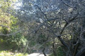 Obalené stromy pavučinou