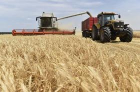 Na jihu Moravy zbývá sklidit čtvrtinu obilí