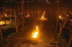 Zapálené svíce ve vinohradu