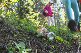 Sbírání odpadků v lese