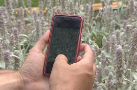 Mobilní aplikace pomůže s rozeznáním květin