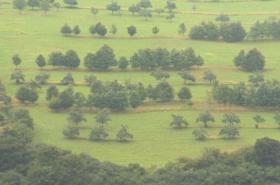 Ekofarma zabraňuje erozi vysazováním stromů