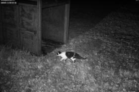 Fotopast u odchytové klece zachytila jen kočku