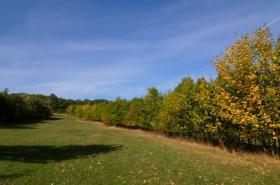 Stromy v krajině. Ilustrační foto