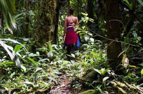 Ekvádorský deštný prales