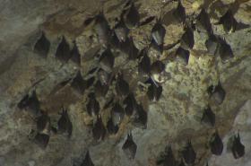 Netopýři v Ochozské jeskyni