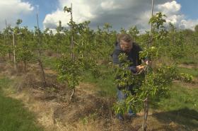 Dopad mrazů na úrodu ovocnářů