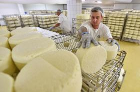 Výroba plísňového sýra v závodě Madety