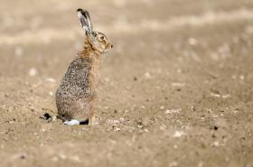 Jed má nepřímo ohrozit i zajíce