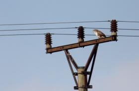 Vysoké vedení ročně zabije desetitisíce ptáků