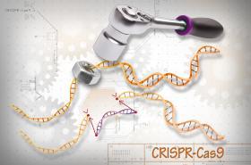 CRIPSR