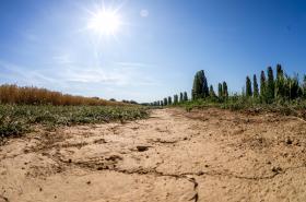 Sucho v Německu v létě 2019