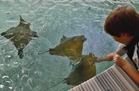 Krmení rejnoků ve zlínské zoo