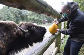 Lidé donesli zvířatům do Zoo v Brně kaštany nebo dýně