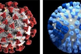 Srovnání nového koronaviru (vlevo) a chřipkového viru (vpravo)