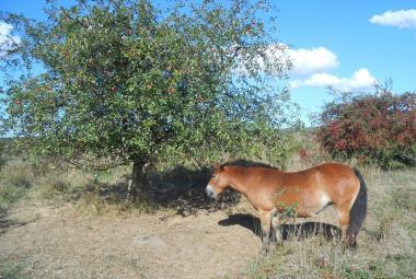 """Divocí koně proměnili milovickou pastvinu ve """"velkou lékárnu"""""""
