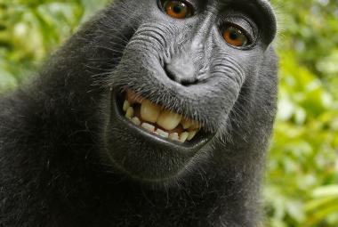 Makakova selfie