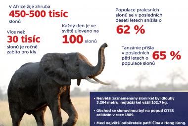 Sloni a slonovina