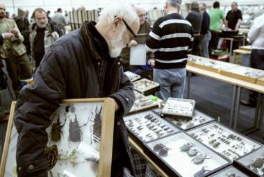 Švankmajer vybírá veřejnou sbírkou peníze na nový film: Hmyz