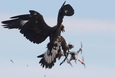 Orel ničí dron
