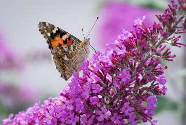 Český ráj motýlů se nachází u Milovic. Žije tu polovina druhů našich denních motýlů