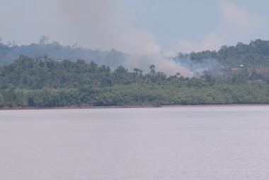 Záběry ČT zachycují vypalování pralesa