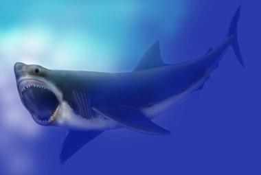 Novorození megalodoni byli větší než dospělý muž. Živili se svými sourozenci, odhalila studie
