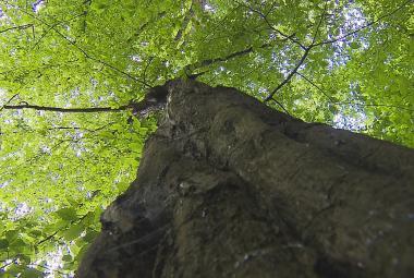 Do lesů by se měla vrátit voda. Lesníci obnoví potoky, tůně či mokřady
