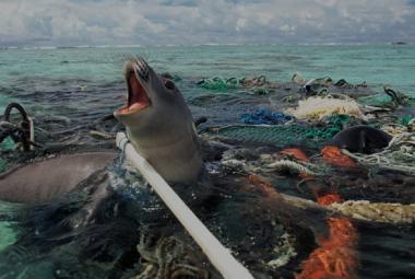 Plastový kontinent v Tichém oceánu už je větší než Německo, Francie a Španělsko dohromady